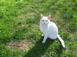 Hier gehts zu meinem Hauptblog - katzenfreundin