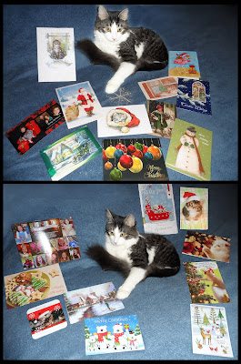 Anakin The Two Legged Cat &amp; his Christmas Cards