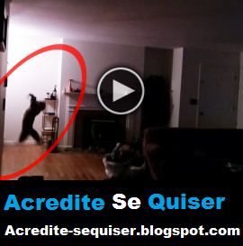 Animais - Gato Pega Morcego Dentro de Casa em Pleno Ar. Incrível