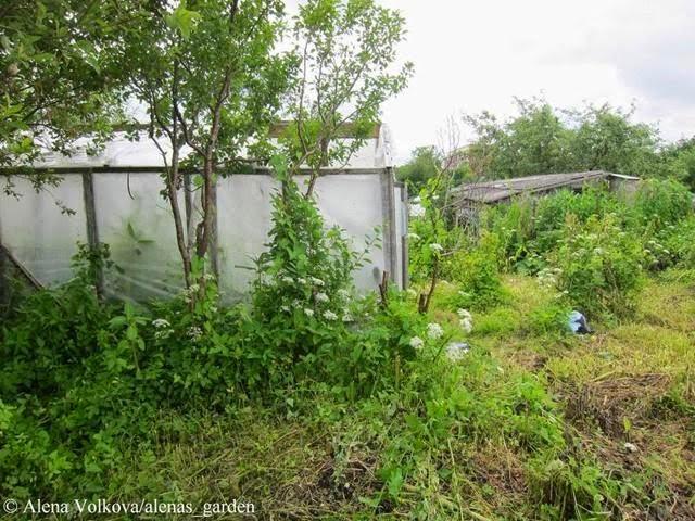 аленин сад, часть3, до, после, участок, дача, освоение участка, целина, сад, огород, старая теплица