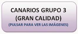 Canarios Grupo 3 (GRAN CALIDAD)