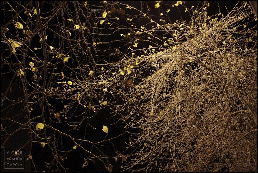 fotografia,naturaleza,noche,night_leaves,valencia,ramas,hojas