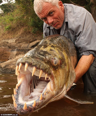 Goliath Tigerfish Ikan Monster Sungai Air Tawar Yang Mengerikan