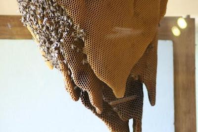 Mengenal Lebah Lebih Dekat di Museum Lebah Spanyol