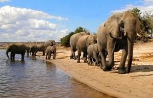 Afrika kıtasının güneyinde yer alan Botsvana
