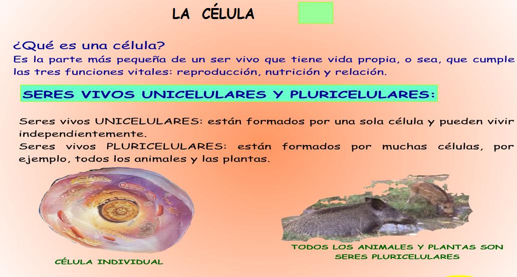 http://www.ceiploreto.es/sugerencias/juntadeandalucia/la_tierra/seresvivos/indexseresvivos.html