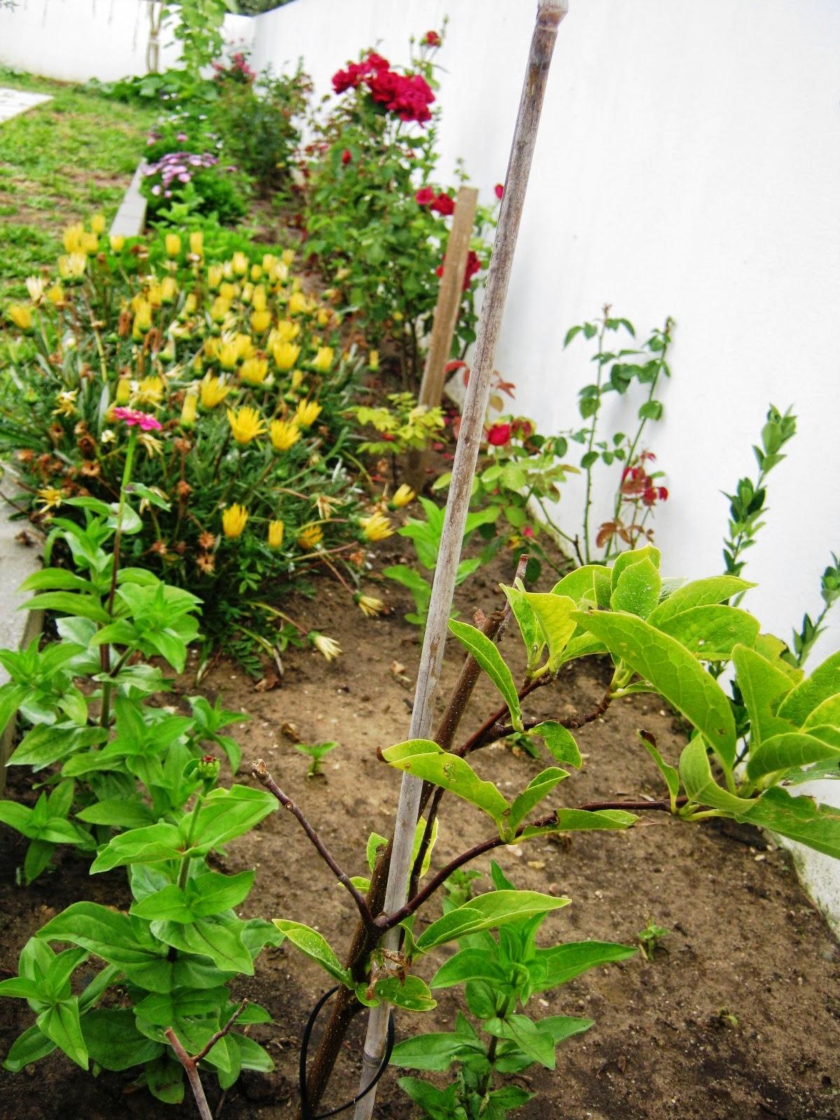 jardim fundo quintal:ESTE É O JARDIM DO FUNDO DO QUINTAL E DO PORTÃO DOS FUNDOS, É MAIS