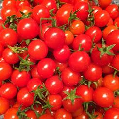 Everglades Tomato Seeds