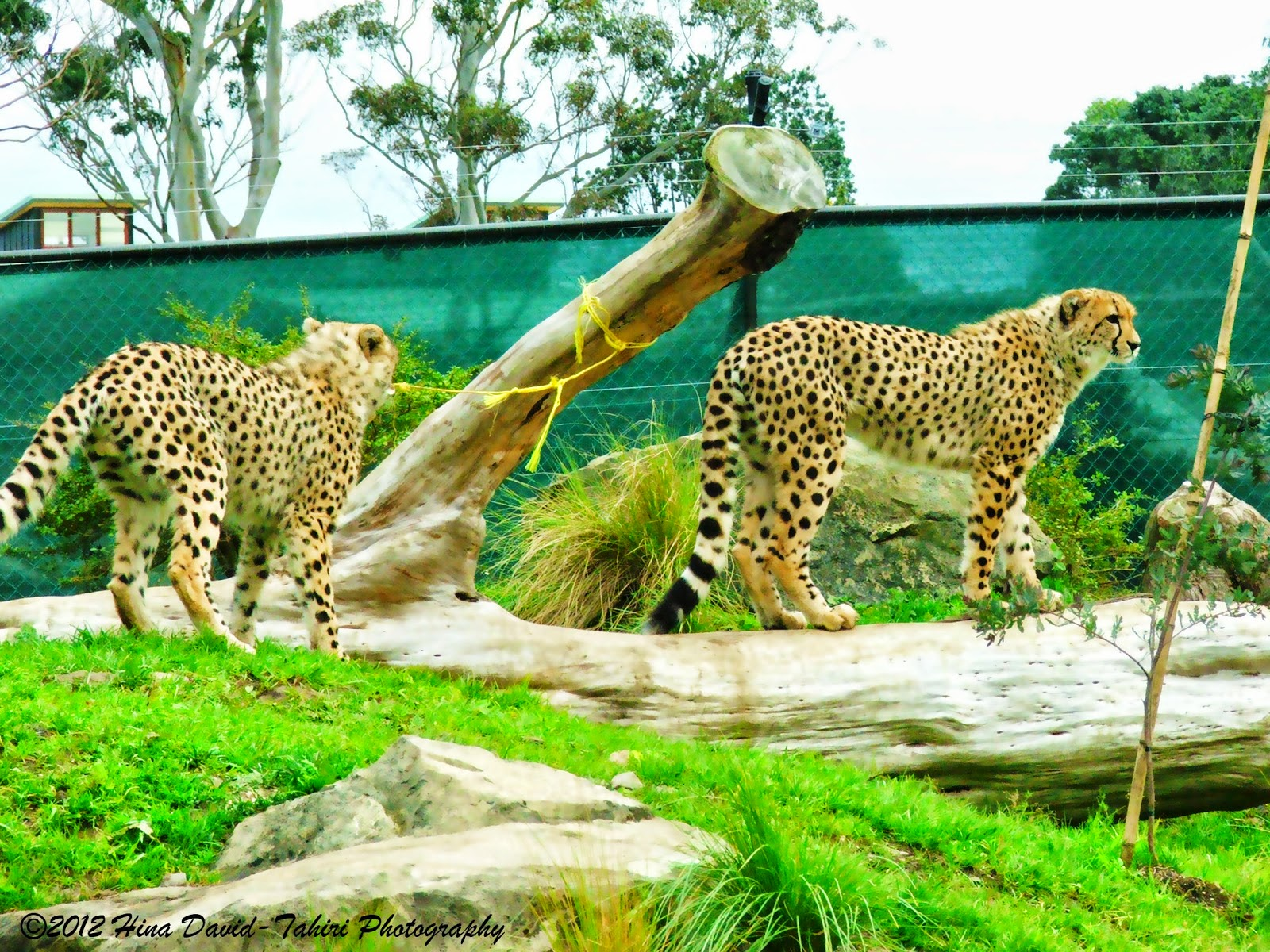 HINA DAVIDTAHIRI PHOTOGRAPHY Auckland Zoo Animals
