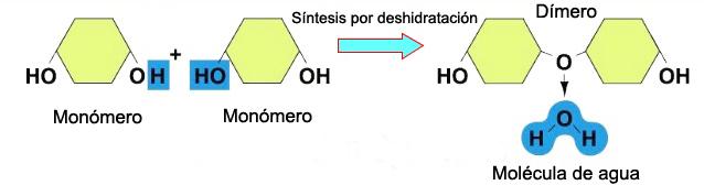 Reacción de síntesis por deshidratación