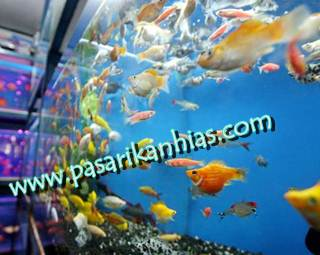 Tentang Pasar Ikan Hias Com