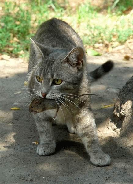 El carro de freyja - Como cazar un raton en un piso ...