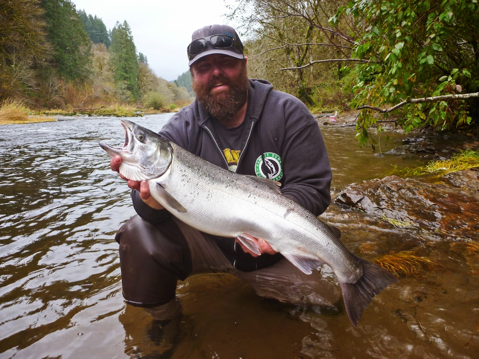 Rain or shine an outdoor column coho populations for Alsea river fishing report