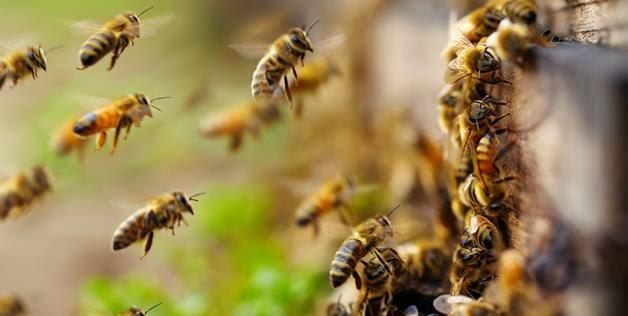 Και οι μέλισσες έχουν συναισθήματα