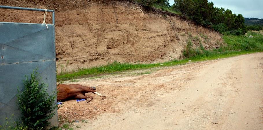 Pest control haram bunuh 14 ekor kuda