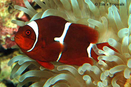 Top 10 Pet Fish Care Tips Picture Record