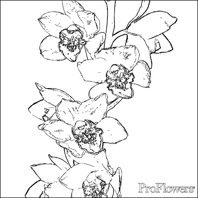Coloring Pages for Kids Orchid