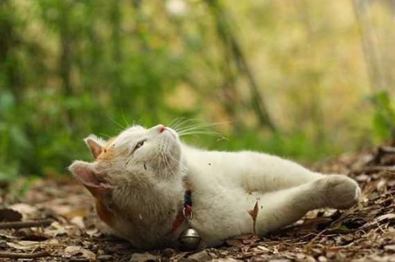 Gambar Kucing Senyum godean.web.id