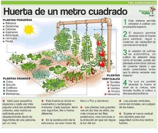 El nuevo sentido sembrando y cosechando - Trabajos caseros para hacer en casa ...