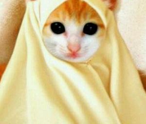 Foto kucing yang cantik