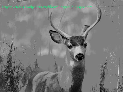 Sketches of Young Buck Widescreen desktop Wallpapers