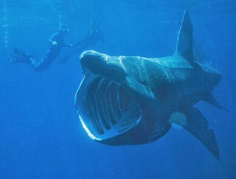 Top 10 : The Biggest Shark in the World - Mysteries of The ...