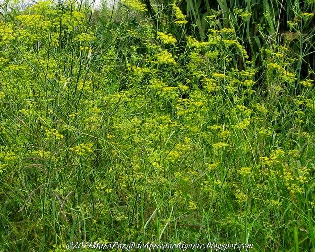 flores amarelas, Aveiro