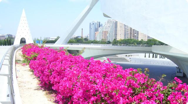Valencia-Flores en la Ciudad de las Artes y la Ciencias