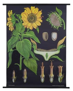 THE EVOLUTION STORE BOTANICAL POSTER