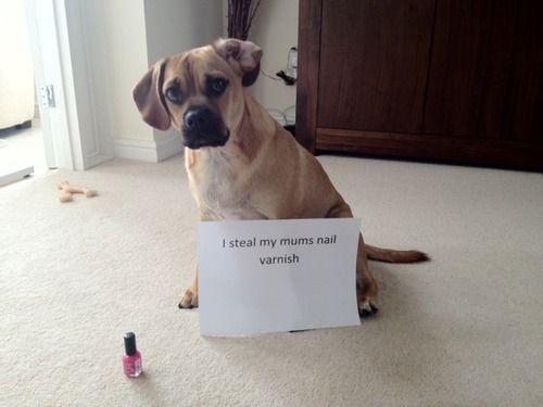 Dog shaming, Dog Shame, Shaming Dogs, Blog Dog Shaming, Texts From Dog, Text From Dog, Texts With Dog, Dog Texts