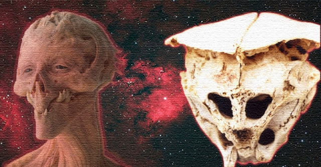 Mysterious Bulgaria Skull May Belong To An Alien Say Scientists