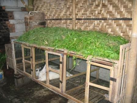 kandang kelinci dari bahan bambu