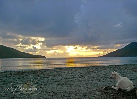 Goat watching the sunset at the beach of Silanguin Cove in Zambales hover_share