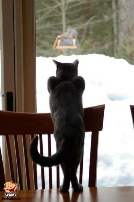 Kucing Yang Seksi