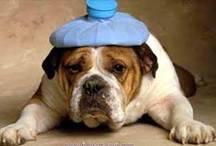 Cefaleia e Enxaqueca – Dicas e Conselhos para um Tratamento Natural