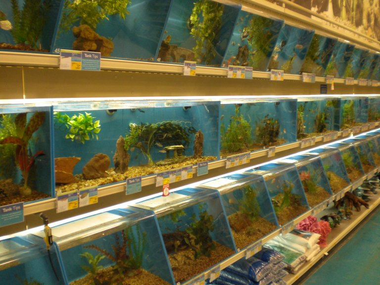 My top collection pet store pictures for The fish store