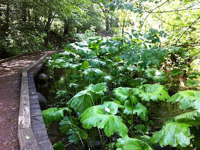 Lithia Park trail