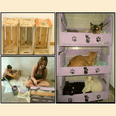 Casa de gatitos muchos gatos en una misma cama