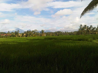 Rice Field in Ubud