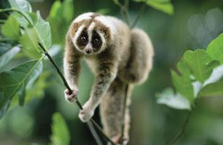 Hewan-hewan Ini Juga Berpuasa Loh [ www.BlogApaAja.com ]