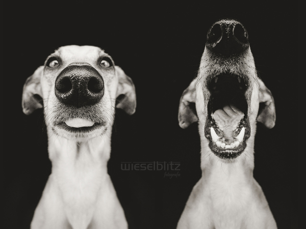 Schnauze - Nice Nosing You - Photos of dog noses by Elke Vogelsang at Wieselblitz. Notes from the Pack.