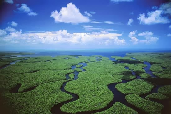 the ecosystem of the florida everglades The florida everglades is a complex ecosystem once spanning four million acres, the everglades have shrunk to half that amount ecosystem decline began with draining wetlands for irrigation channels.