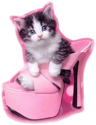 gifs de gatos tiernos