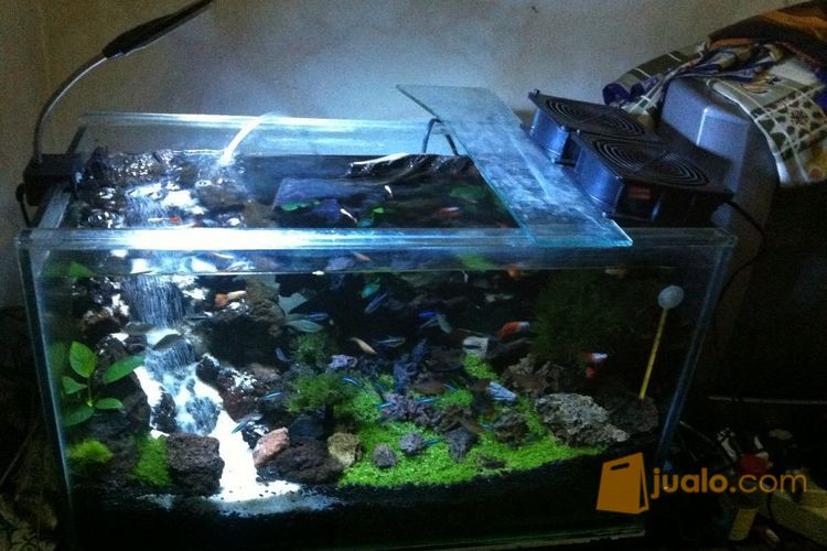 macam tema aquascape ~ Aquascape Batang