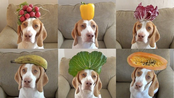 This Dog Balances 100 Fruits & Vegetables On Its Head