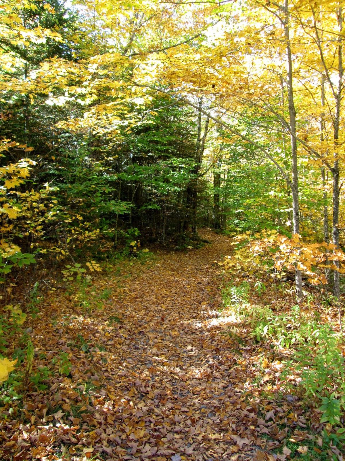 Appalachian Mountain Club News 102 Foliage Update From