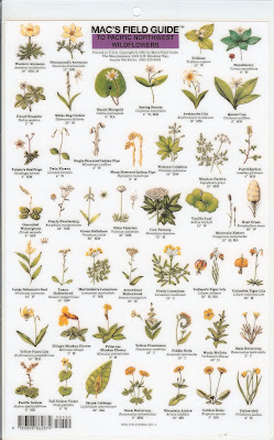 Mac's Field Guide to Pacific Northwest Wildflowers