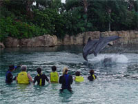 Discovery Cove's Dolphin Swim