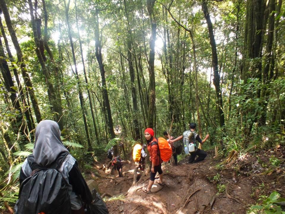 Track Gunung Cikuray Garut Jawa Barat