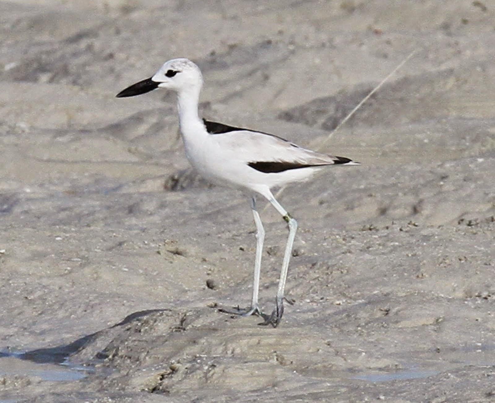 Kenya birds